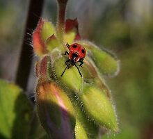 Bug on the buds by missmoneypenny