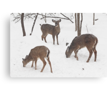 Whitetail Deer In Snowy Woods Canvas Print