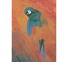 Mysterious Macaw Photographic Print