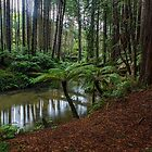 Paradise - Otway National Park, Victoria by Malcolm Katon