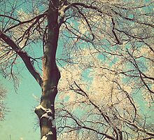 Branches in Turquoise Sky by elenor27
