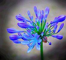 Nature Creates Beauty by Al Bourassa