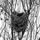 The Nest by Sharon Woerner