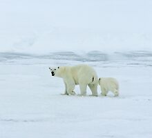 Polar Bear and Cub by BravuraMedia