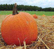 Pumpkin Patch  by BravuraMedia