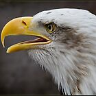 American Bald Eagle by alan tunnicliffe