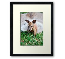 Wallaby Joey Framed Print