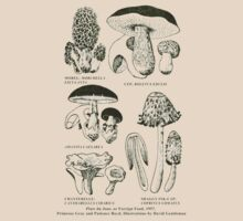 Retro cookbook mushroom illustration by Jane McDougall