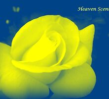 HEAVEN SCENT by Colleen2012