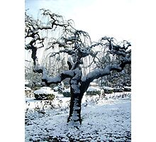 An unusual tree Photographic Print