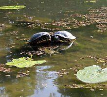 turtles on lake by spetenfia