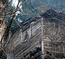 old wooden house in the forest by spetenfia