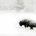 Bison in the mist by Linda Sparks