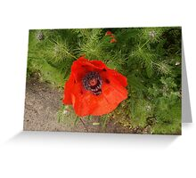 Poppy In The Rain Greeting Card