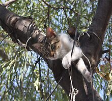 Bi-Color Tabby Cat In Tree 4 by taiche