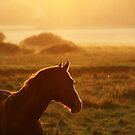 10.9.2014: Horse on Pasture at September Evening II by Petri Volanen