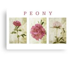Peony Triptych Canvas Print
