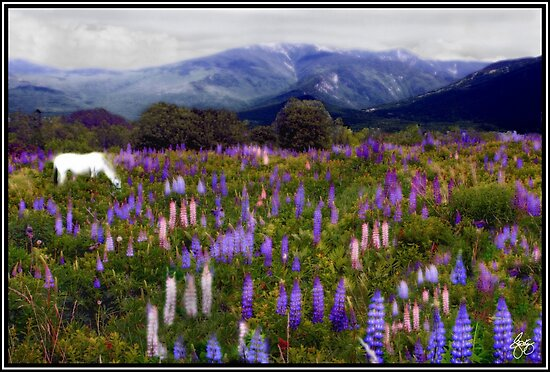 High Country Lupine Dreams by Wayne King