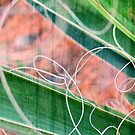 Abstract in Nature by Susan Werby