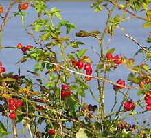 The Fruits Of Autumn Hedgerows by Fara