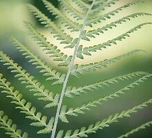 Fern by Anna Phillips