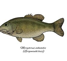 Largemouth bass by Eugenia Hauss