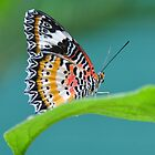 Malay Lacewing  by Poete100