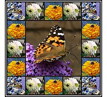 Bees and Butterflies Collage Photographic Print