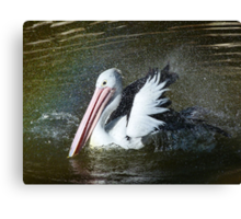 Australian Pelican Shower Time Canvas Print