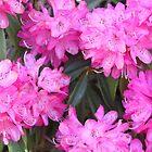 Pink Flowers Spring by fantasytripp