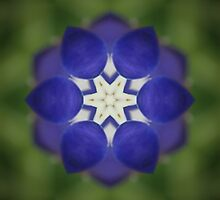 Inner Bluebonnet by Eggtooth