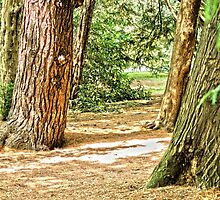 forest landscape by spetenfia