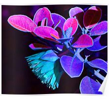 Fantasy Tamala Rose Abstract Poster