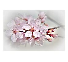 Blossom part 1 Photographic Print
