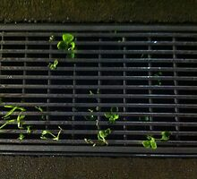 Greenery in the Gutter by * Red Wolf