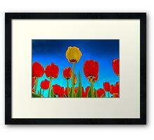 Dutch Tulips part 2 Framed Print