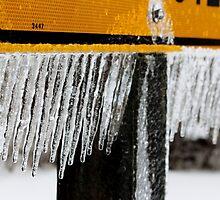 Ice Storm II by Kathleen Daley