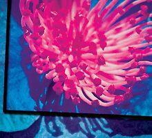 Blue Anemone  by willieC
