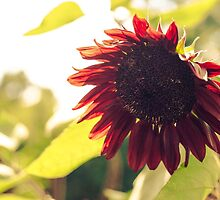 Red Sunflower by W. Lotus