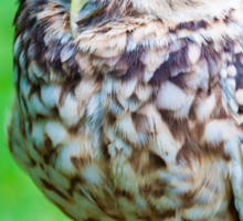 Close up portrait of little Owl against green background Sticker