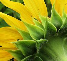 Back of Sunflower 2 by Nicole Schmidt