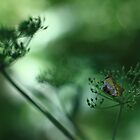 Leaf Fall On Cow Parsley. Jupiter 9 on EOS 7D by rennaisance
