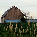Fields by WildThingPhotos