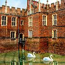 Swans Rule Hampton Court by JohnYoung