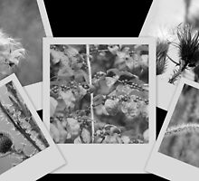 Wild flowers and Berries collage in Black and White by Valeria Lee