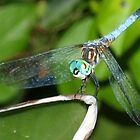 Blue dragonfly with aqua eyes by ?? B. Randi Bailey