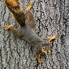 Spider Squirrel! 100 views 9/18/14 by Keala
