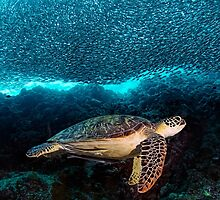 Turtle and Sardines by Henry Jager
