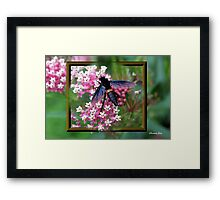 Something with Wings Framed Print