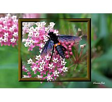 Something with Wings Photographic Print